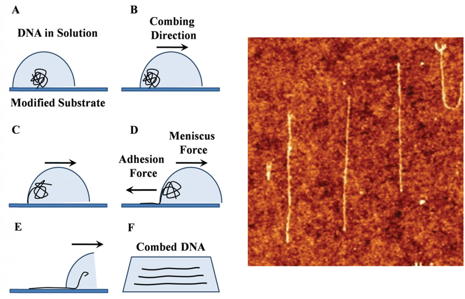 journal of nanoscience and nanotechnology